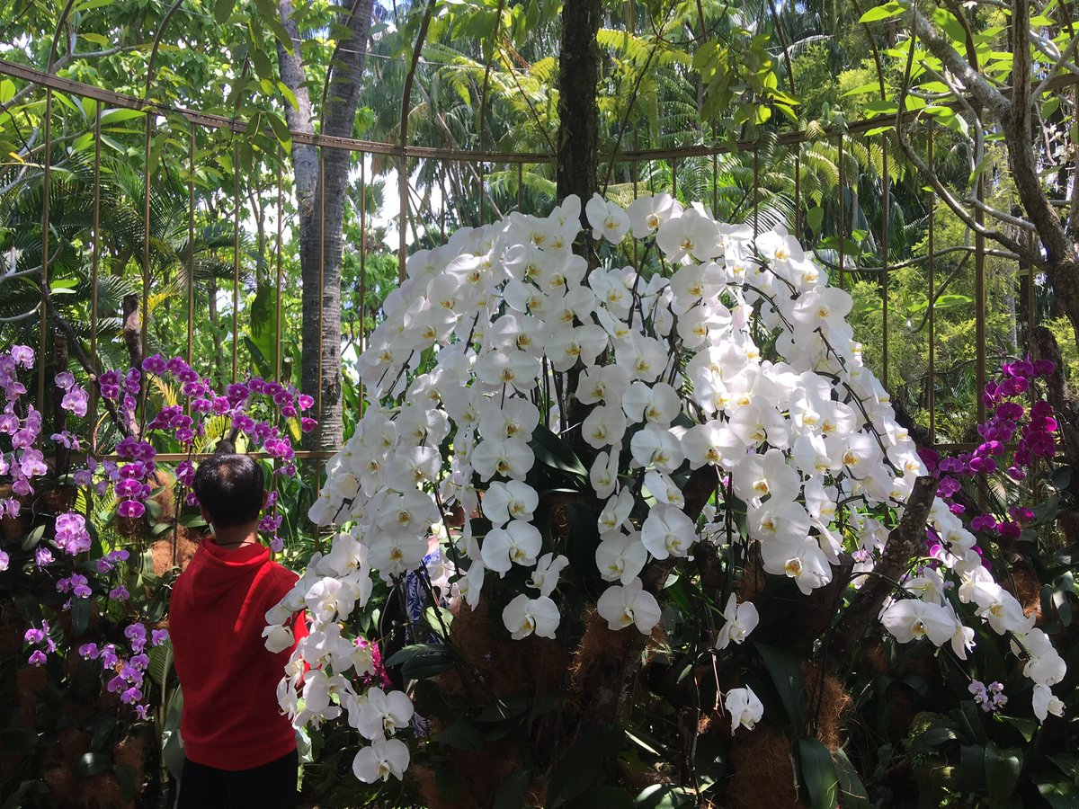 Orchids in Botanical Gardens, Singapore <br>http://pic.twitter.com/uAsijcqZaB