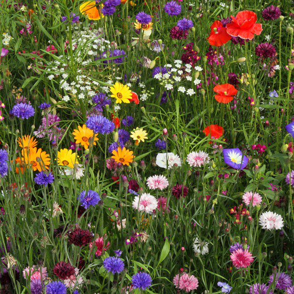 We&#39;re on a mission to spread love and kindness with every flower meadow we sow - please RT if you would like to join us, and maybe win a seed mix for your garden in today&#39;s #FreebieFriday competition <br>http://pic.twitter.com/iKraW30mSI