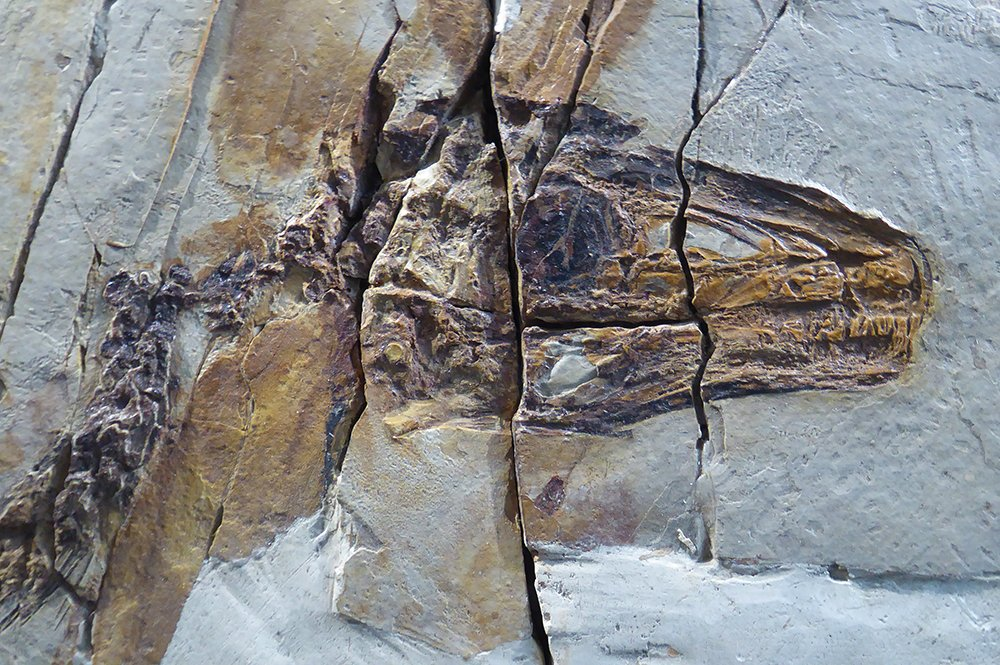 Stu Pond's photo on #FossilFriday
