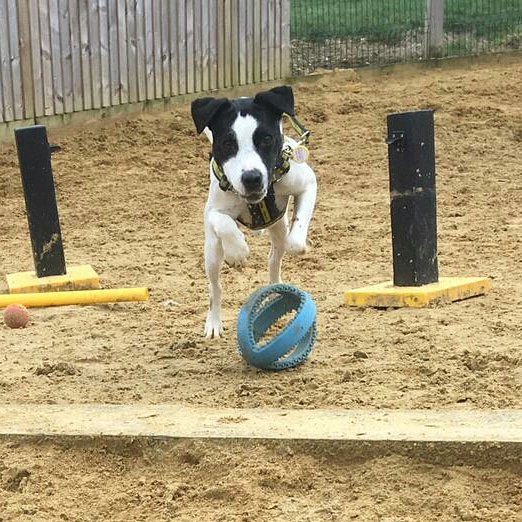 Playful pooches Danny and Emma have that #FridayFeeling anyone wanna play?   #friyay #dogstrust #Terriers #AdoptDontShop<br>http://pic.twitter.com/sB2adQ2uy2