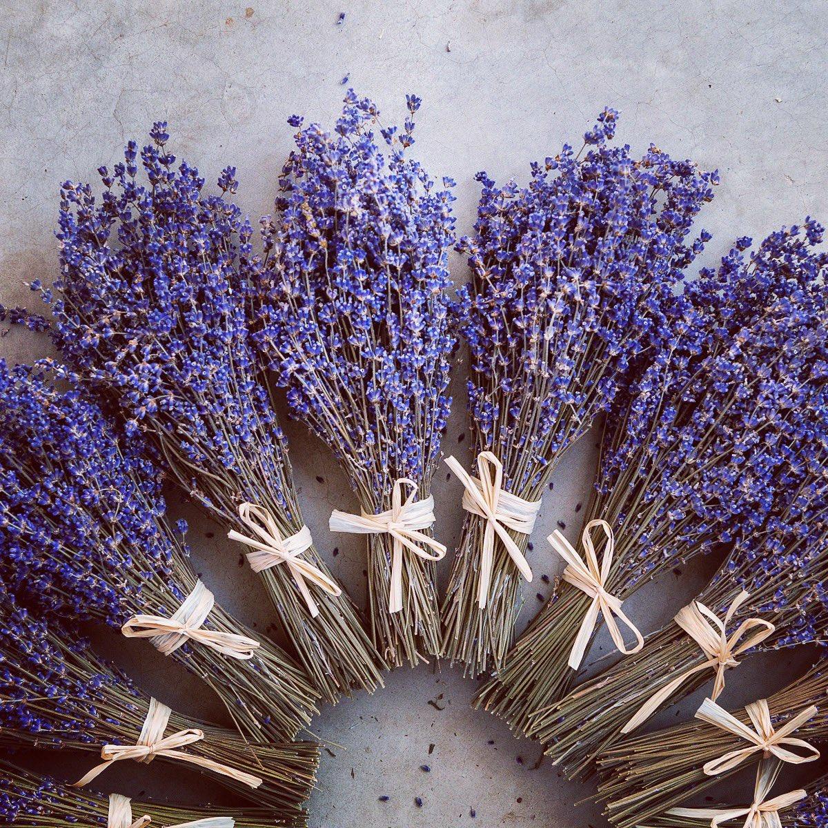 Terre Bleu Lavender Farm (@terrebleulav) | Twitter