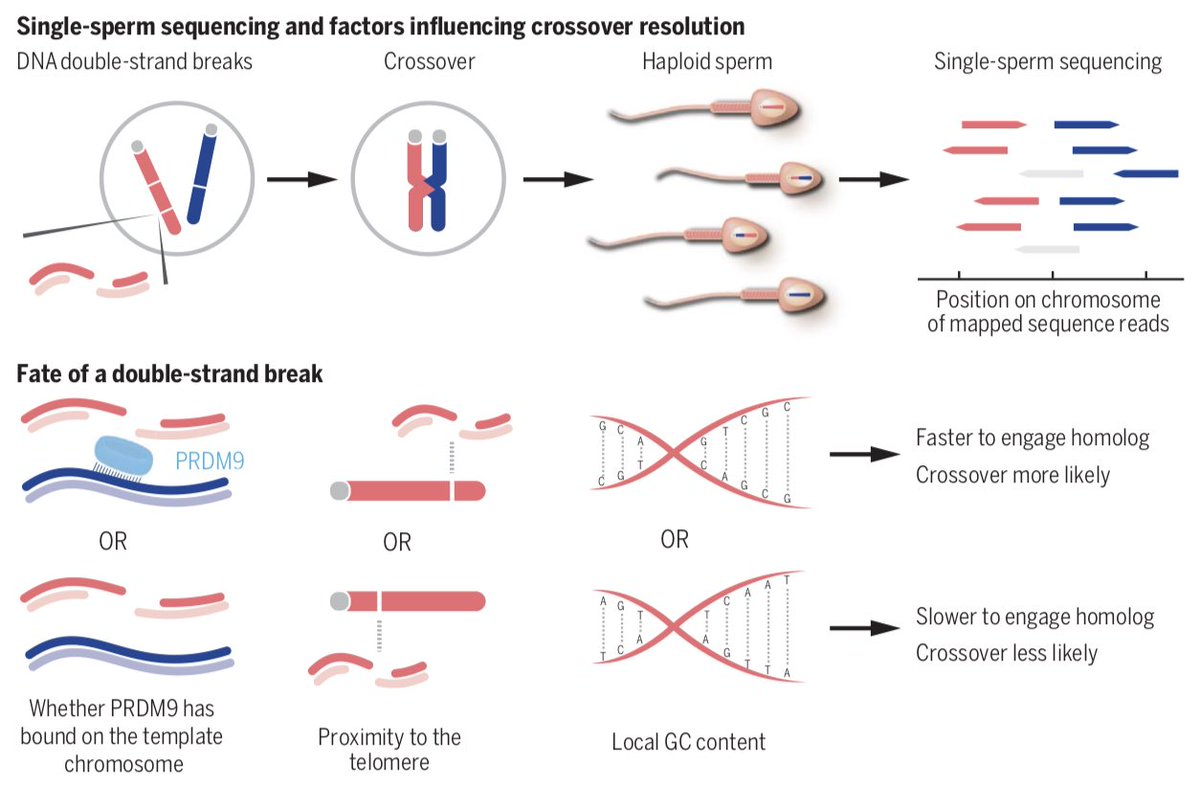 Evidence for maternally inherited factors favouring male homosexuality and promoting female fecundity