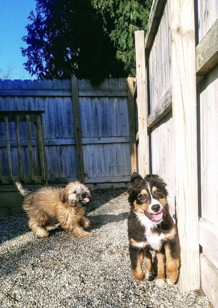 Ollie and Gracie put on their silly faces