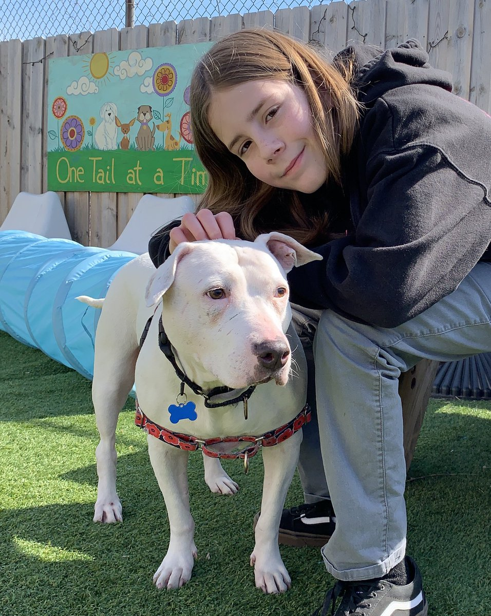 I pet Louella. She is a Pitbull, Polar Bear mix up for adoption @onetailatatime. Her adoption fee is sponsored for the right home. Louella is deaf, but knows hand signals. She is friendly and cuddly, but doesn't like other dogs. <br>http://pic.twitter.com/SZaRH1XJFD