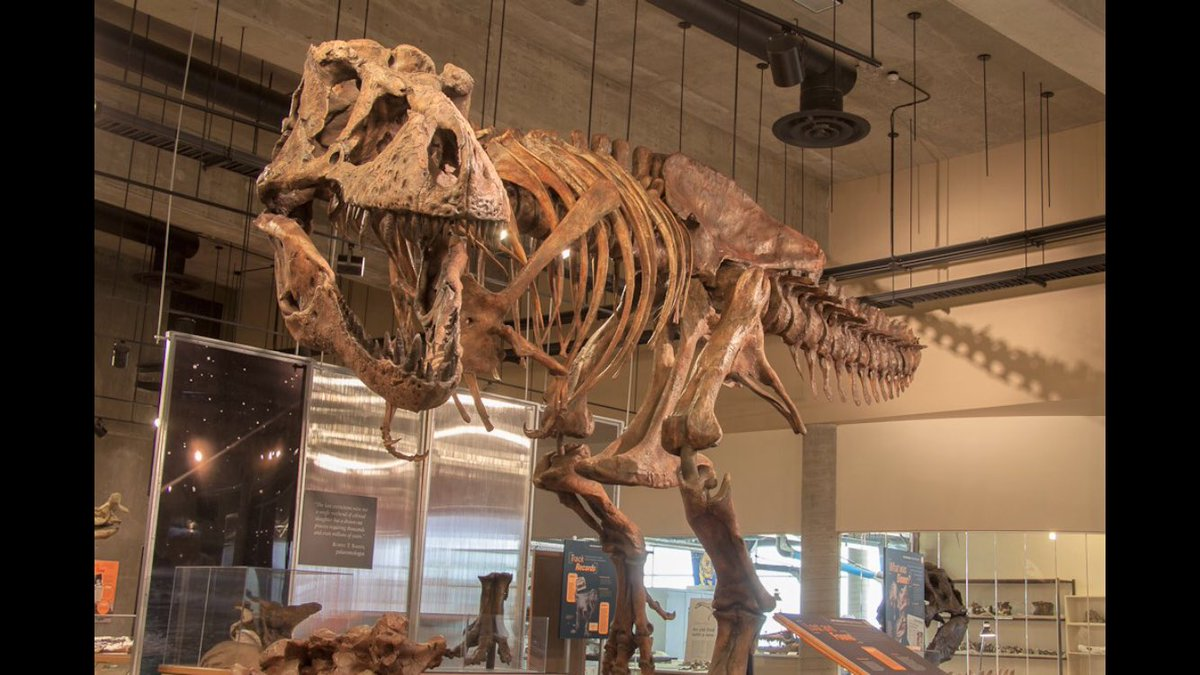 Evan Johnson-Ransom's photo on #FossilFriday