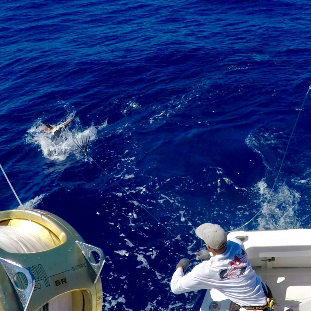 Kona, HI - Hula Girl released a Blue Marlin (450) and a Striped Marlin.
