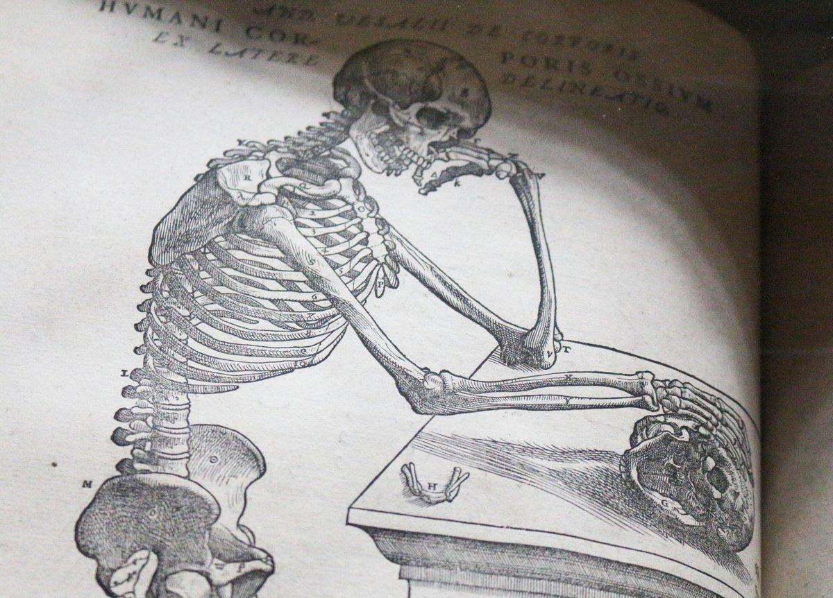 St John S College Cambridge On Twitter Even Skeletons