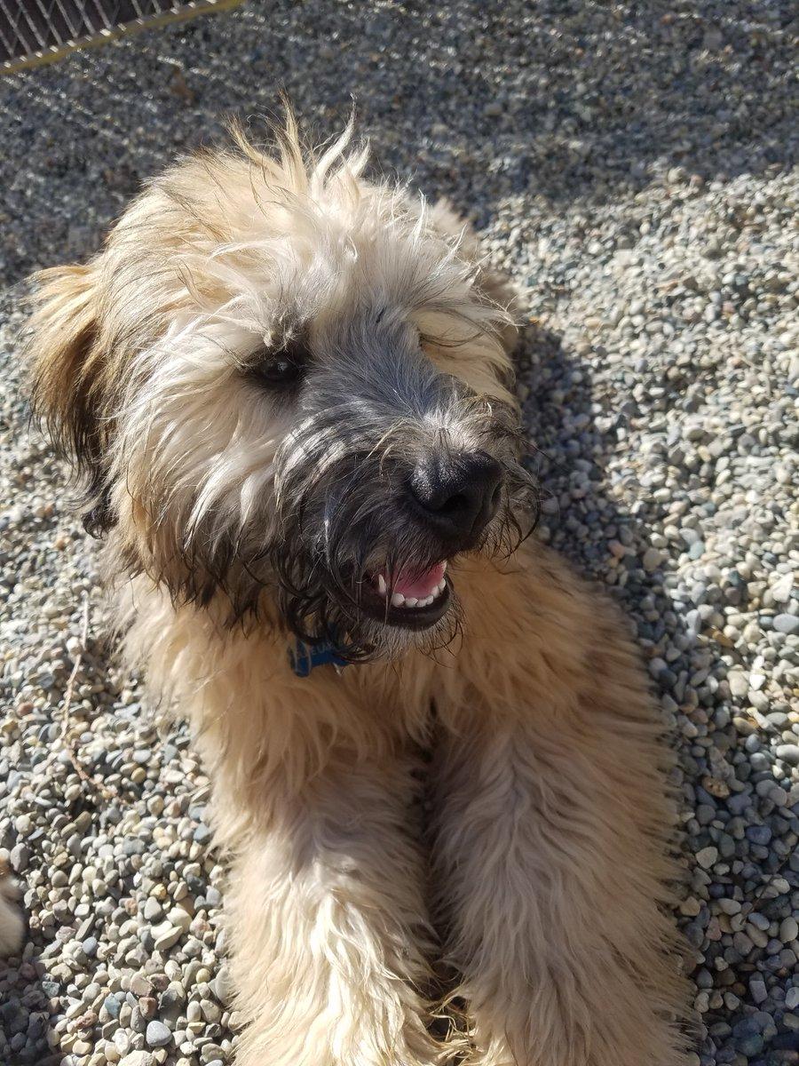 Ollie soaks up the sun!