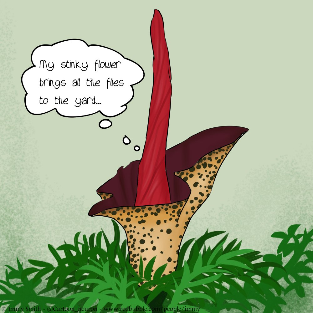 """A cartoon amorphophallus with a thought bubble reading """"my stinky flower brings all the flies to the yard"""""""
