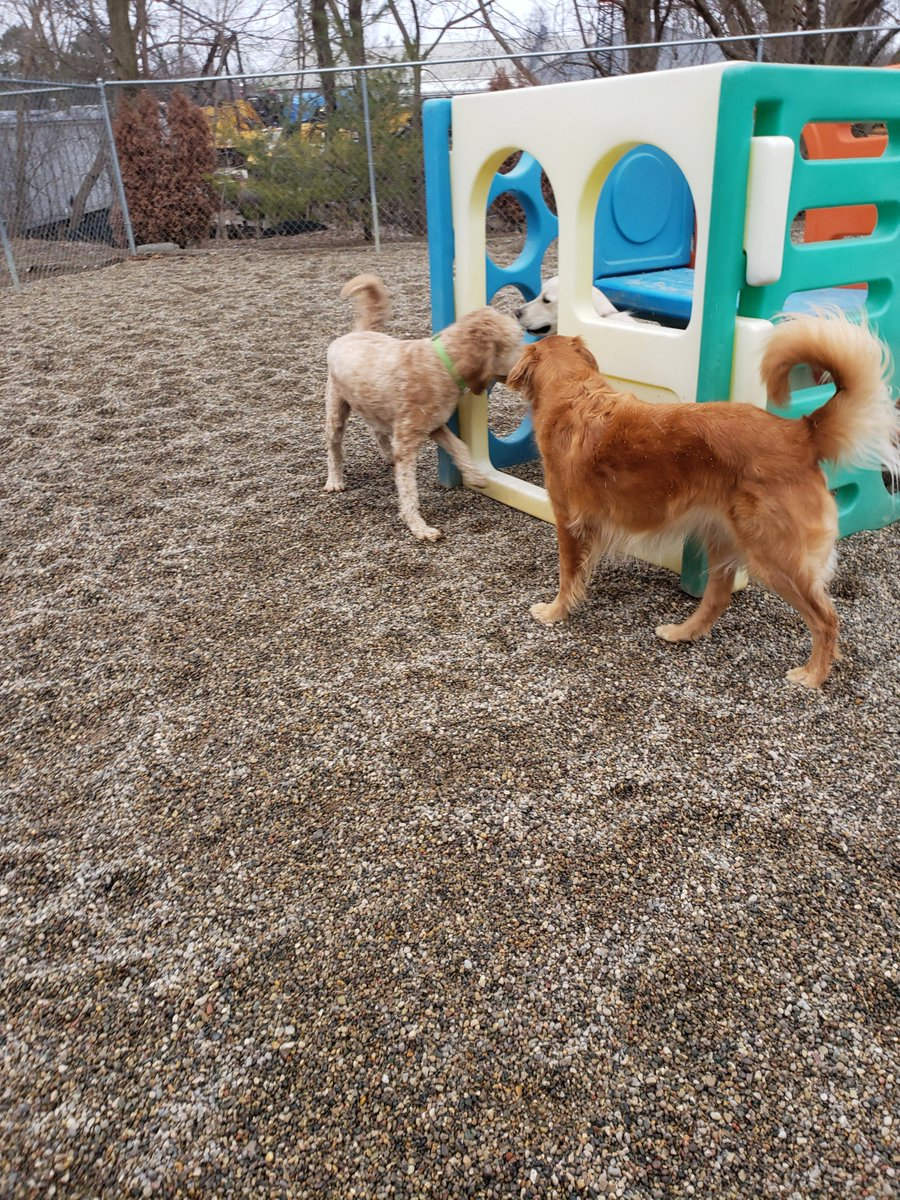 Breslin, Carmine, and Maggie Mae say hi to each other before playing.