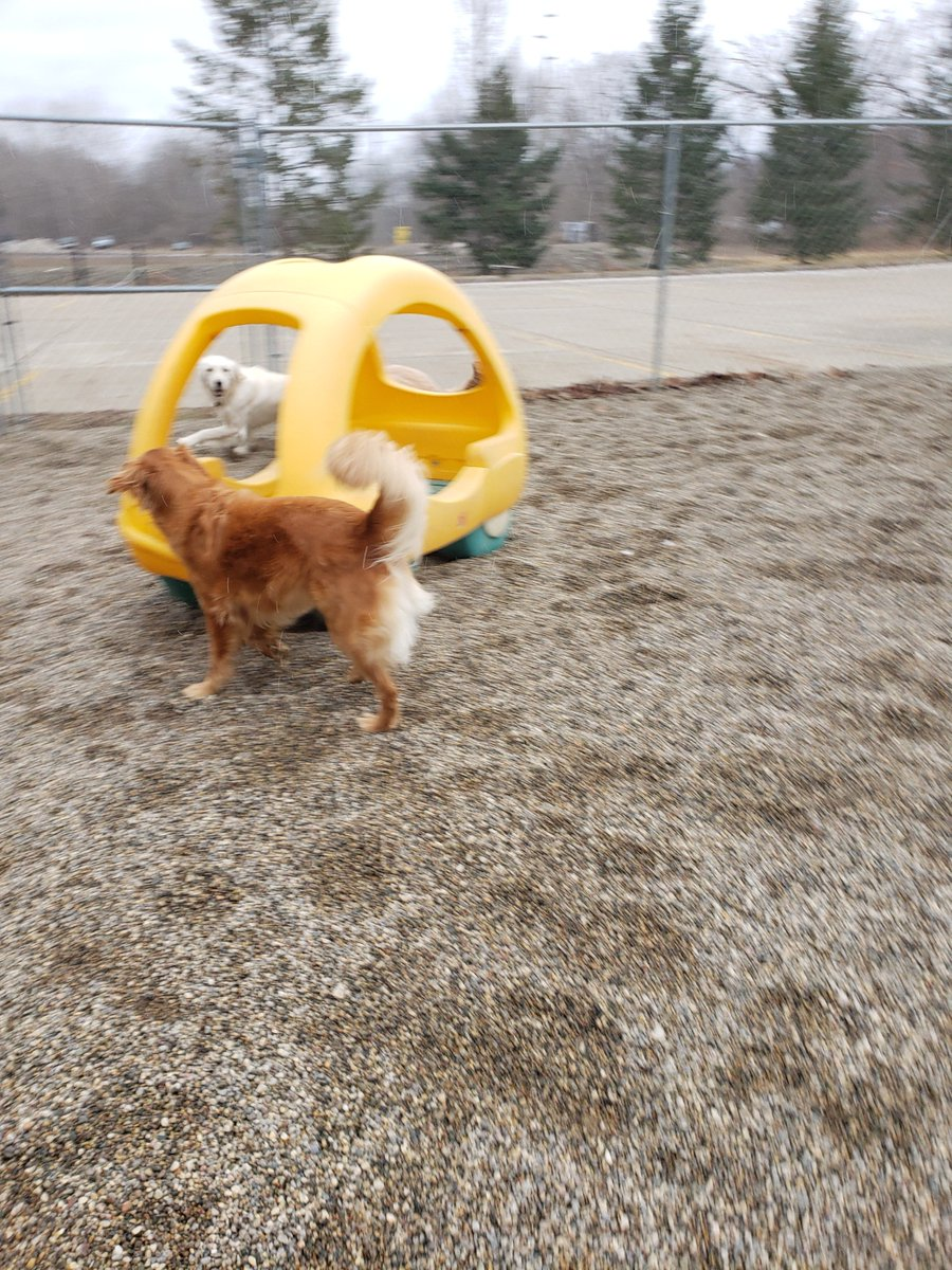 Breslin and Maggie Mae run around the play car!