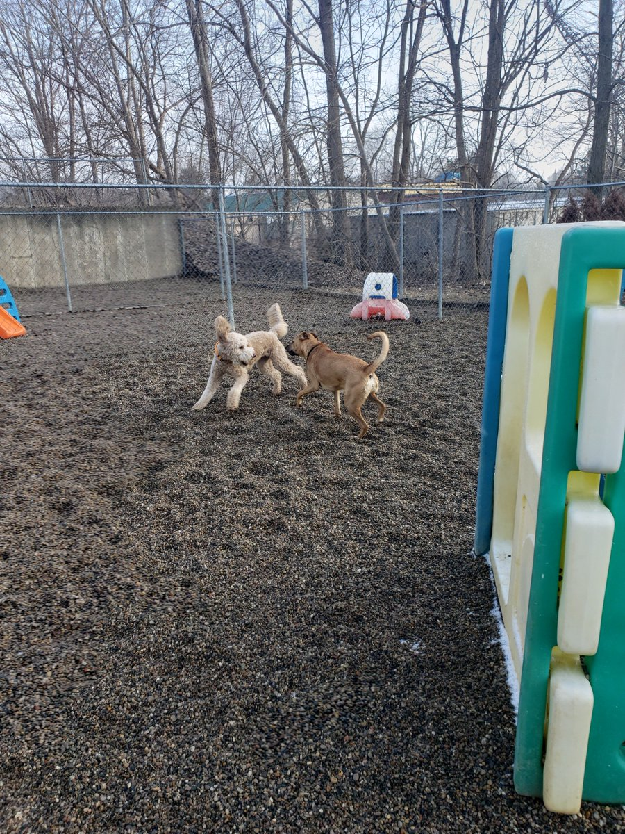 Cooper D. and Zoe J. play chase!