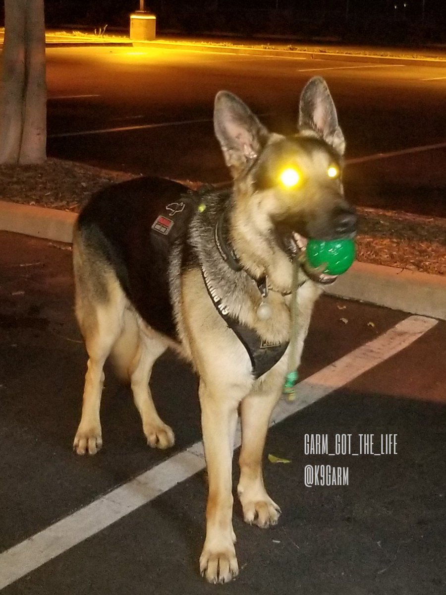 The only pic i got from our HRD pre-cert tonight but he did a fantastic job  #K9Garm #SARK9 #dogsoftwitter #dog #dogs #germanshepherd #gsd<br>http://pic.twitter.com/ADqvpVxQOi