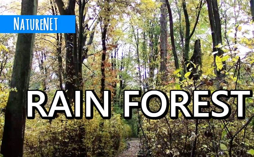 Trail Rain   Relaxing Nature Video https://buff.ly/2DHs5Go  #relax #sleep #study #chill #meditate #nap #nature #rain