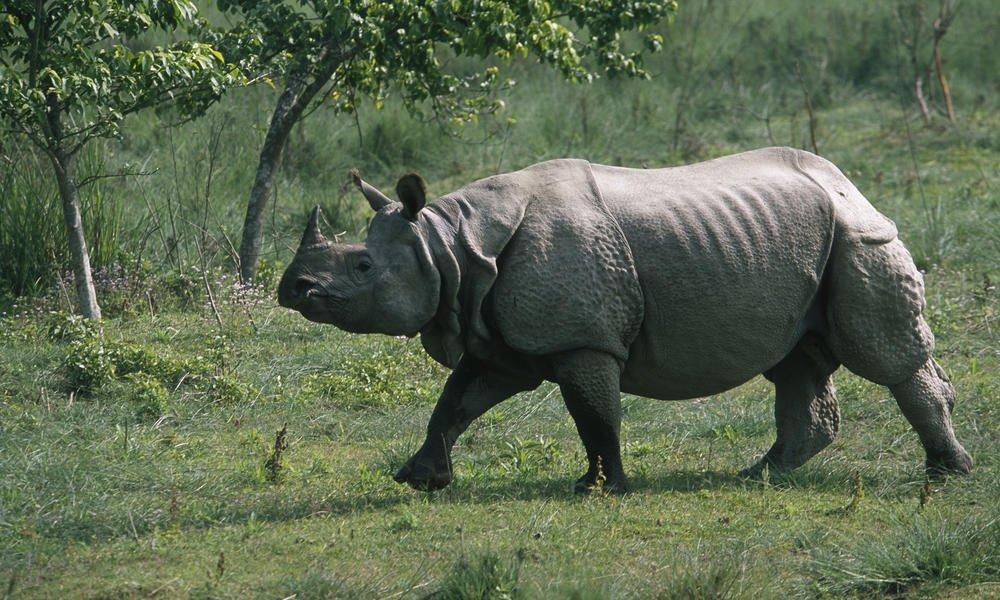 Good news from India! West Bengal's #rhino population hits a record high  https:// goo.gl/nrsn1H  &nbsp;   via @mongabay #wildlife<br>http://pic.twitter.com/4jIQzuYHFK