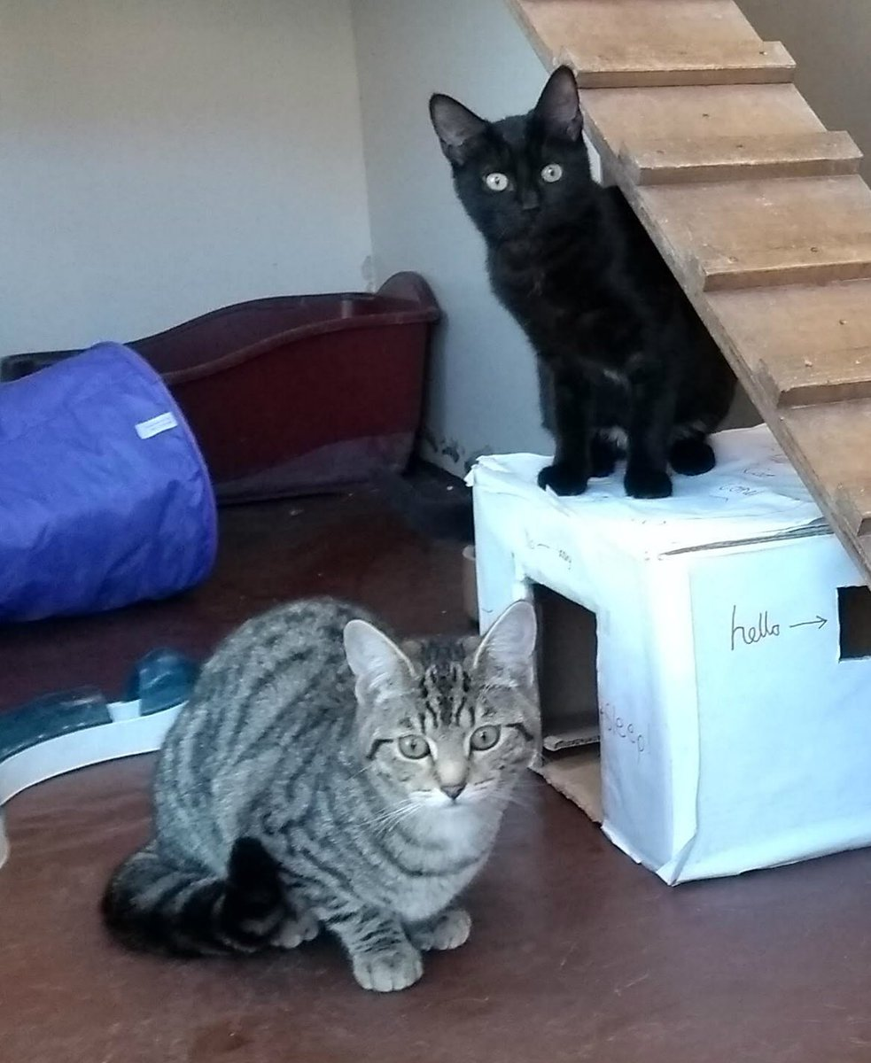 Miss Tabs and Midge are still looking for a new home this #Caturday. The girls are very shy and need a patient and understanding owner. Please #AdoptDontShop today! <br>http://pic.twitter.com/3OWOFtnkBO