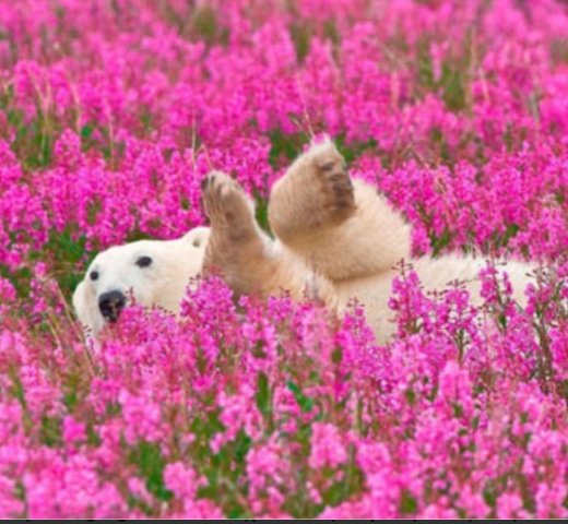 A dog is playing with the flowers.Cute<br>http://pic.twitter.com/30BHYrUJrl