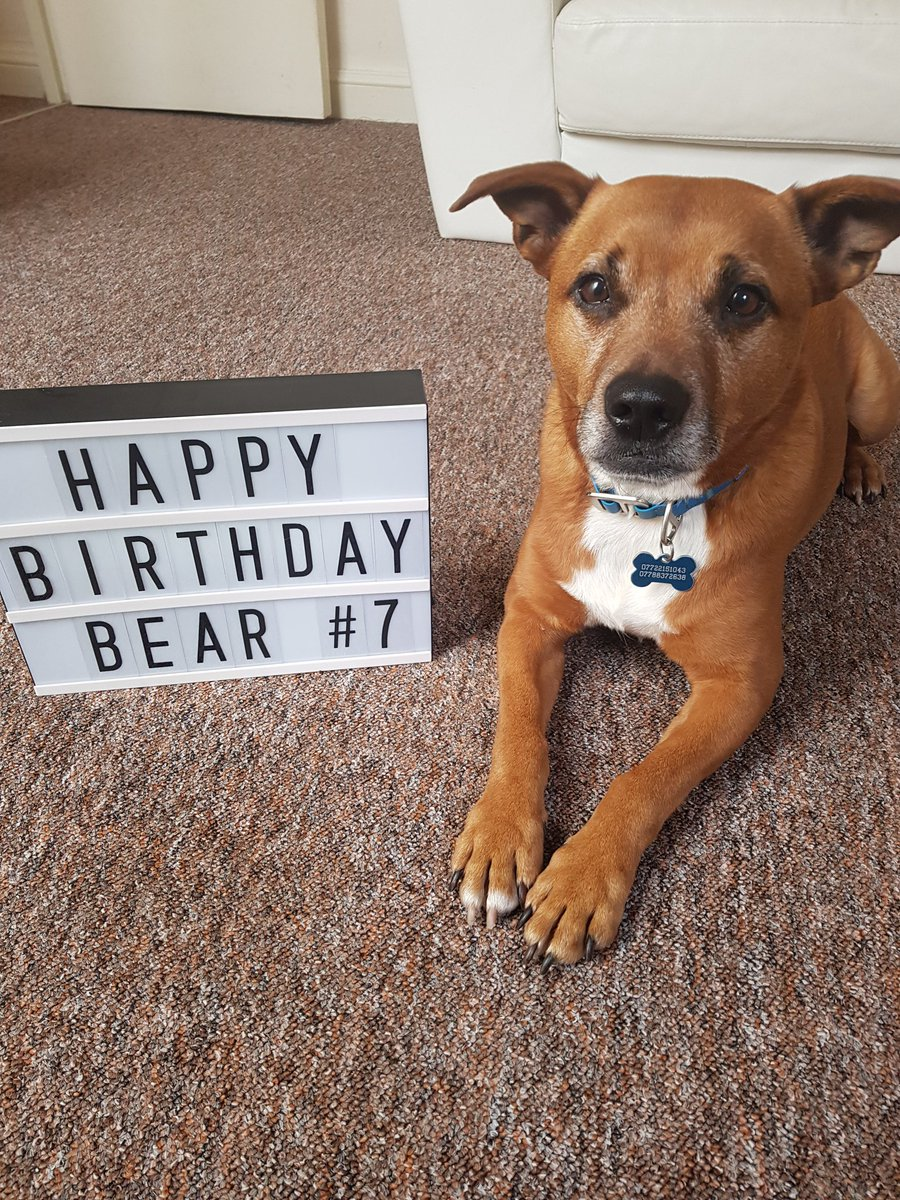 I am having such a fun day. I&#39;m a very lucky boy. Thank you so much for all the birthday wishes  lots of love from me and my mums  #StaffieSaturday #adoptdontshop <br>http://pic.twitter.com/OdgXcVJ1tb