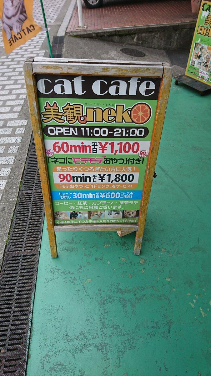 倉敷にも猫カフェあります!観光の際には是非お立ち寄りください♪(因みに僕は行ったことありません笑)  #倉敷美観地区 #猫カフェ #猫 #美観neko #みかんねこ(そう読むそうです)