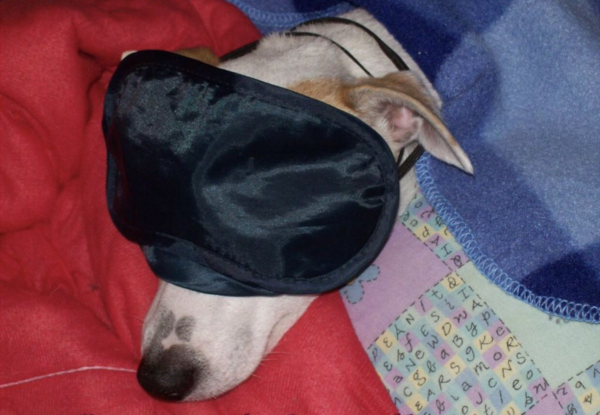 Happy National Puppy Day to my pup, Buddy! As you can see he takes his naps seriously ... very seriously  #NationalPuppyDay #JackRussellTerrier <br>http://pic.twitter.com/nIOQ9QfzMz