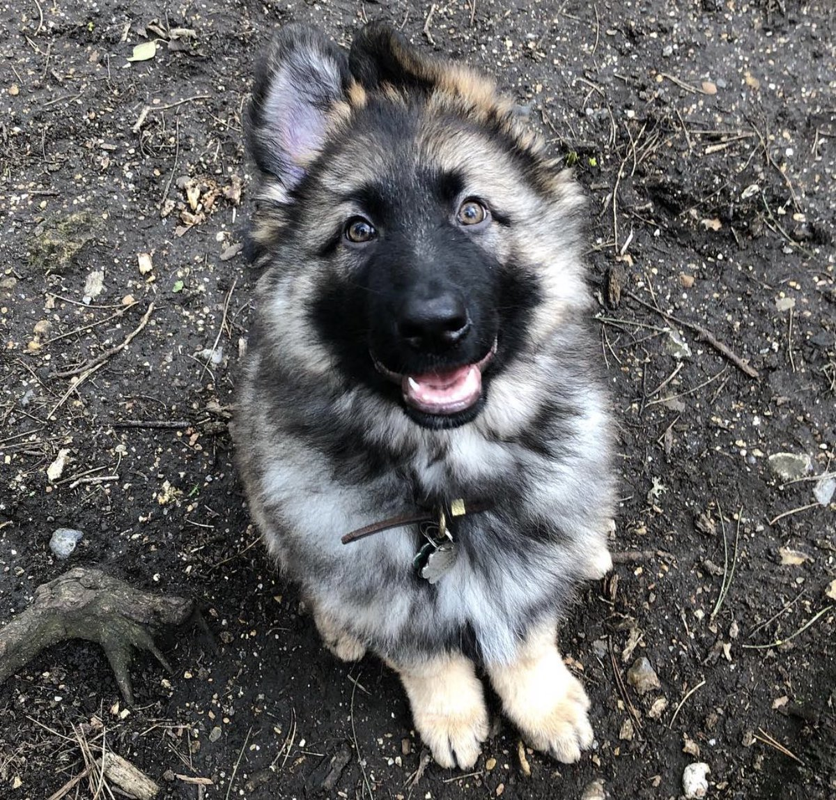 It's #NationalPuppyDay so here's a throwback to me a year ago... #germanshepherd <br>http://pic.twitter.com/lFlunSCNsa