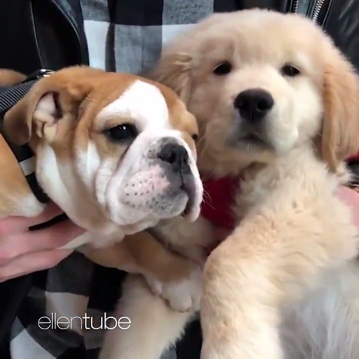 It's #NationalPuppyDay! It's too bad I don't have an adorable puppy montage. Oh, wait. I do. https://t.co/Bd2DRA3cER