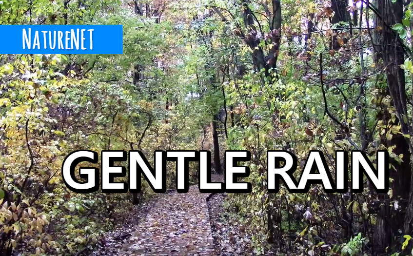 Rain Forest   Relaxing Nature Sounds https://buff.ly/2CuN8ft  #relax #sleep #study #chill #nap #meditate #rain #nature