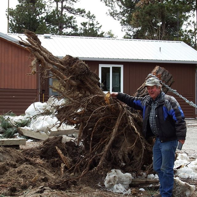 The stump of the tree that fell behind our shop in that last #snowpocalypse #wow<br>http://pic.twitter.com/dqQujAPvUb