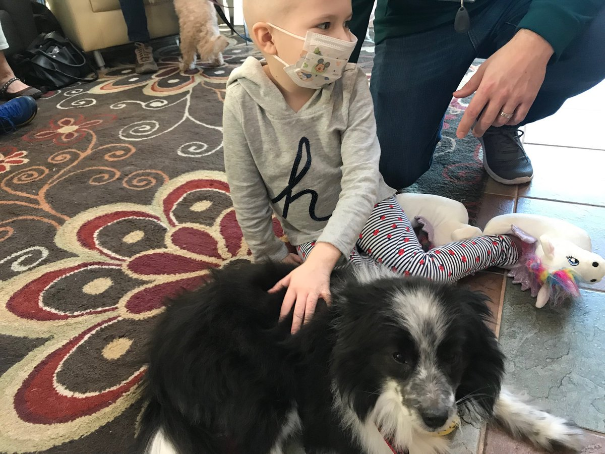 test Twitter Media - A sweet @RMHCincinnati friend of Finn with a tender touch has him settled and feeling fine. @pet_partners #therapydog https://t.co/LZ6k3QSQsY