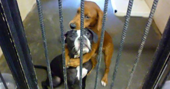 Shelter dog saves best friend hours before euthanasia after hugging photo goes viral  https:// buff.ly/2Jvjrkf  &nbsp;  <br>http://pic.twitter.com/seuMDiIckd