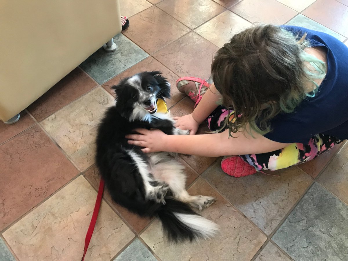 test Twitter Media - Belly rubs not expected but certainly welcome! Thanks @RMHCincinnati from Finny! @pet_partners #therapydog https://t.co/zC9UhuobID