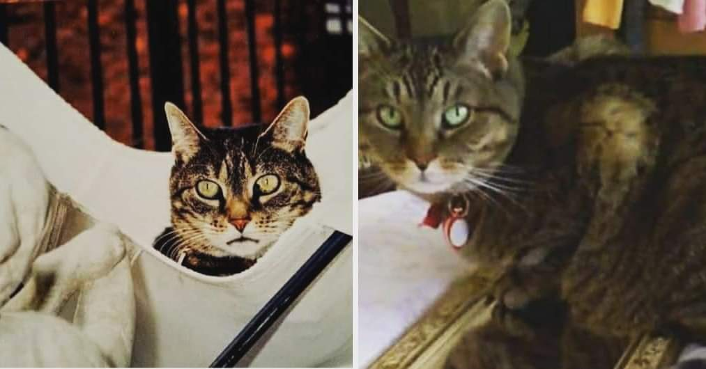 I used to have these two cats though not at the same time. Ashley on the left and India on the right. I still miss them.