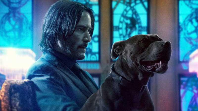 Here's a new John Wick 3 trailer for National Puppy Day! ��  https://t.co/c5mJRFoYeu https://t.co/N70wfuv2be