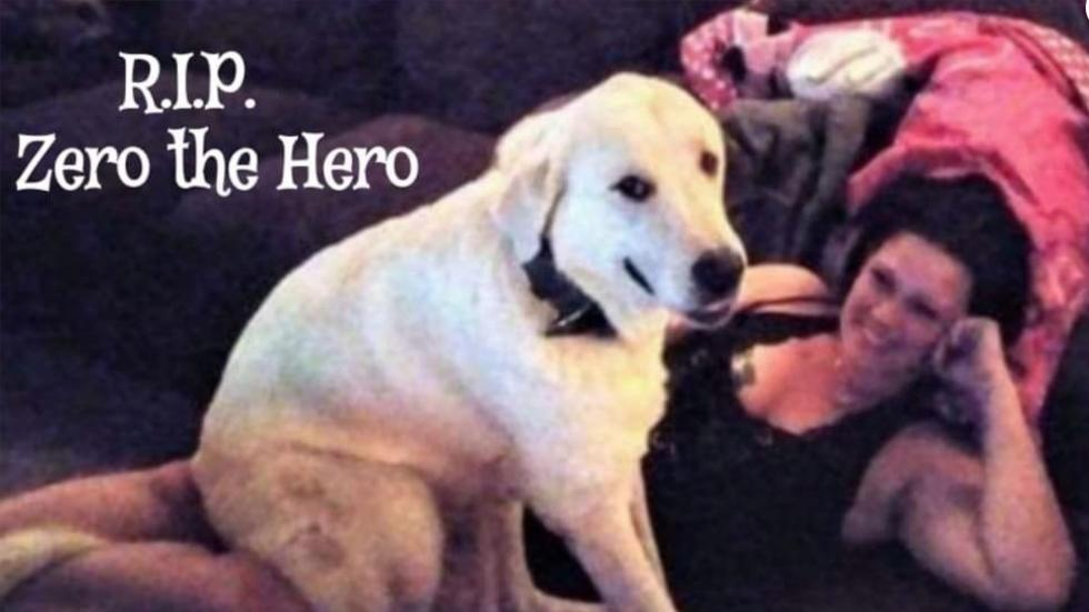 Dog killed after saving family from shooter who opened fire on birthday party http://hill.cm/lFrzcaS