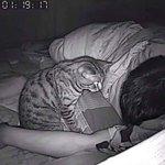 夜中に猫がどんな行動をとっているか撮影してみた!自由すぎて憎めない!