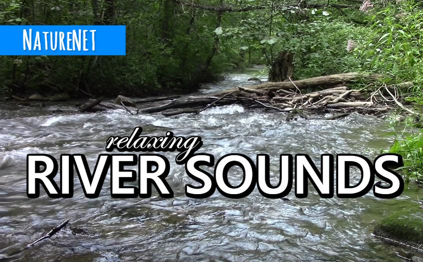 Hidden River   Relaxing Nature Sounds https://buff.ly/2HDjIQi  #relax #sleep #study #chill #nap #meditate #river #nature