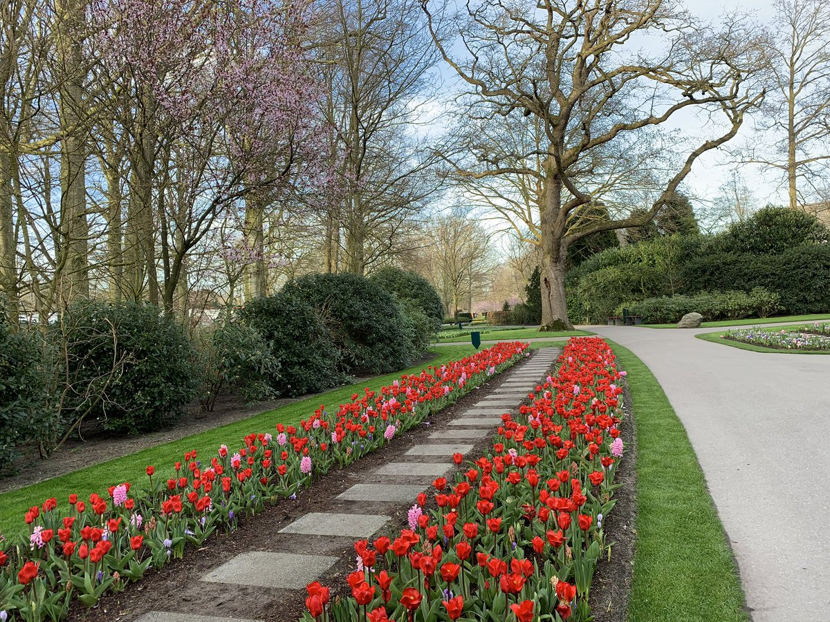 Good morning! Who is visiting Keukenhof today? These early red tulips are waiting for you.   #travel to the #tulipsinholland spring 2019  http:// bit.ly/2EOimBE  &nbsp;  <br>http://pic.twitter.com/XYgqPaLfl4