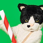 Image for the Tweet beginning: 猫の姿をしたアーティスト @mugithecat の宅録によるピースフルなデビューアルバム「君に会いに」を聴こう🐈🎶🐈
