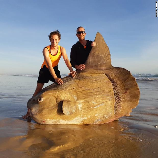 This rare giant sunfish weighing more than a car washed up on a beach in Australia https://t.co/SsHxLGd1YW https://t.co/nzpR6mhgg2