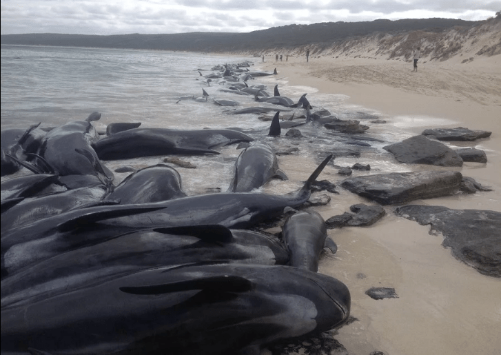 """' Polluted Oceans, Dead Dolphins ' 