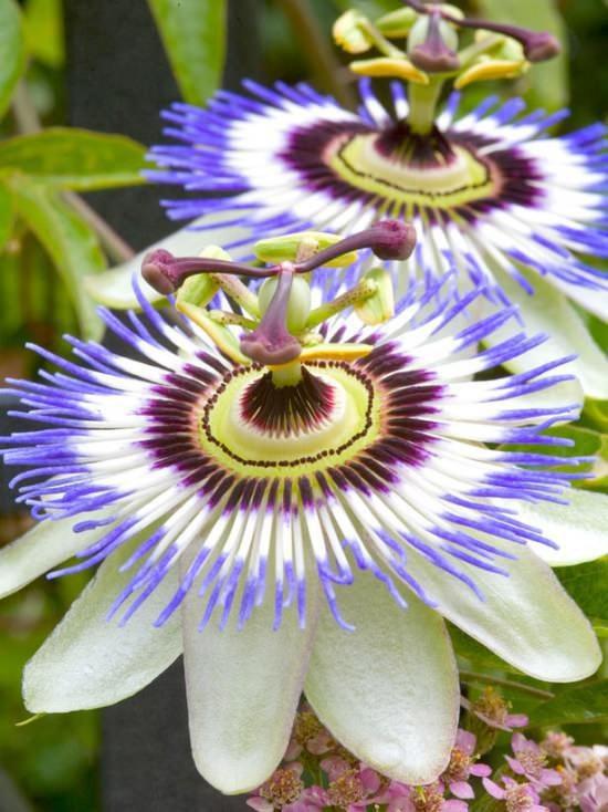 редкие цветы мира фото и названия того чтобы вырастить
