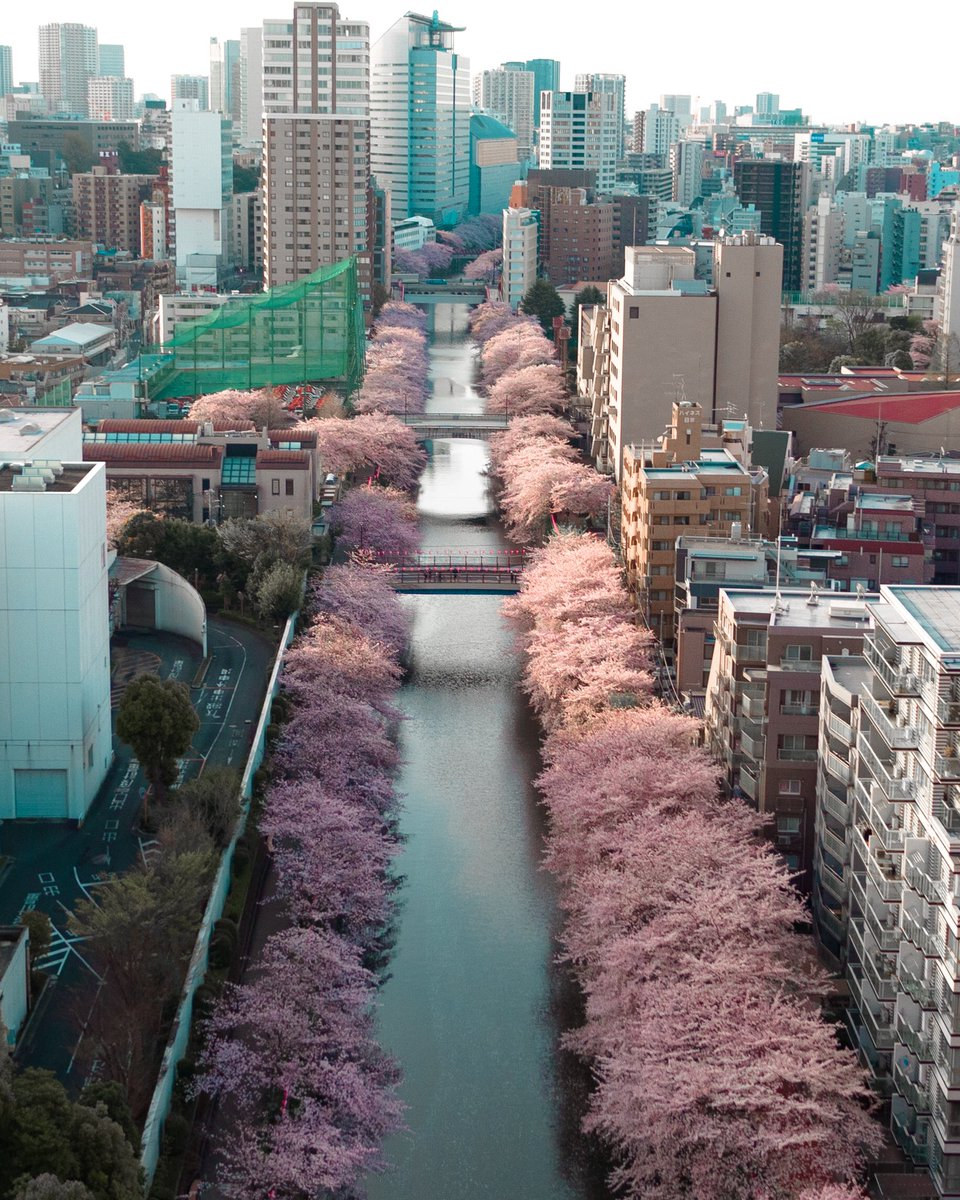 "Photographer Captures a ""Suddenly Appearing"" Path of Cherry Blossoms in Tokyo"