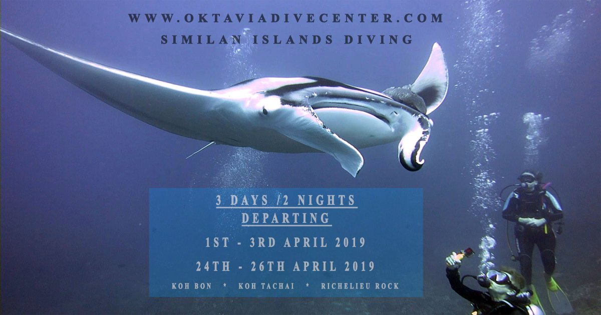 Similan Islands Diving Liveaboard with Oktavia Dive Center!  http://www. oktaviadivecenter.com  &nbsp;    #scubadiving #Thailand #SimilanIlsands #Mantaray <br>http://pic.twitter.com/9ut2AKWgy2