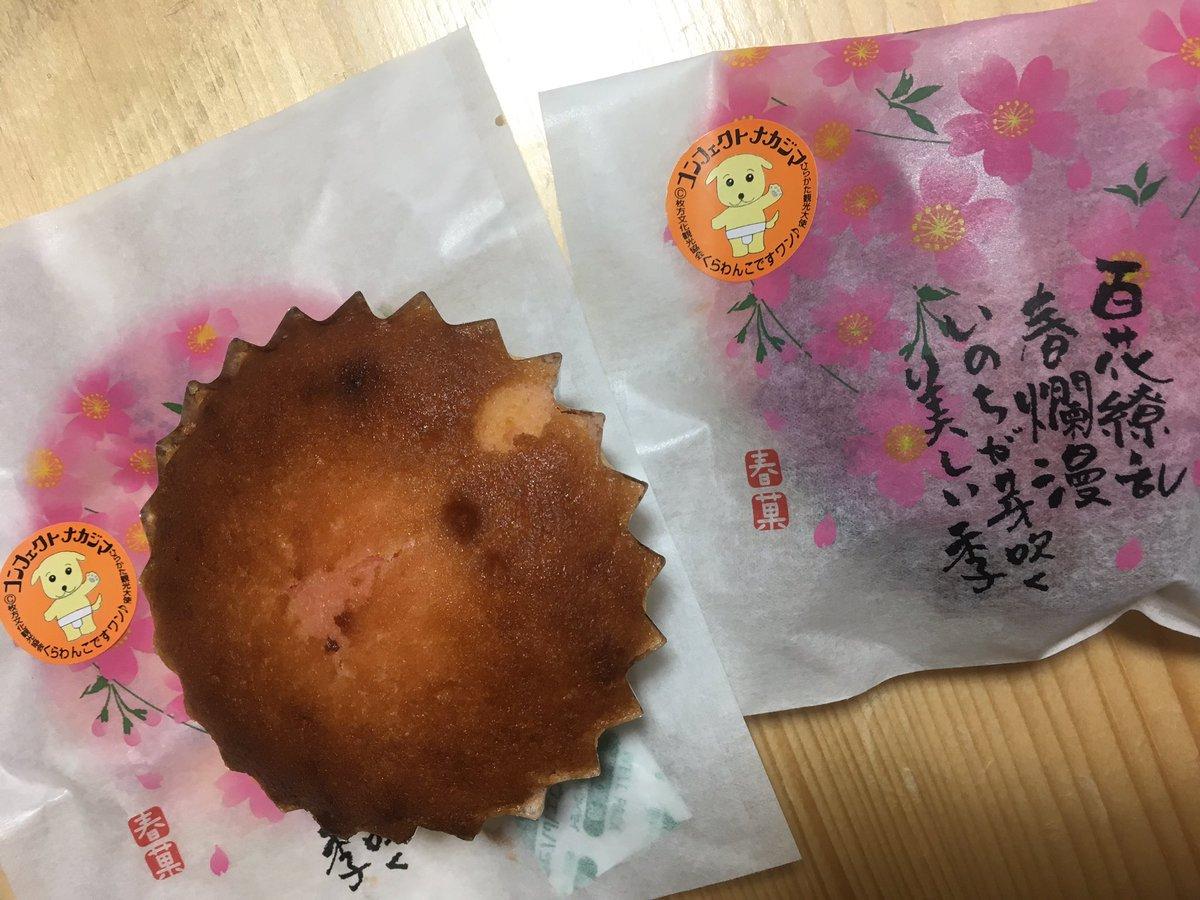 きょうのお菓子 .。.:*☆ コンフェクトナカジマさんの桜マドレーヌ🌸 ほんのり桜の風味(*´꒳`*)  #くらわんこ #桜のお菓子 #ひらかた観光ステーション