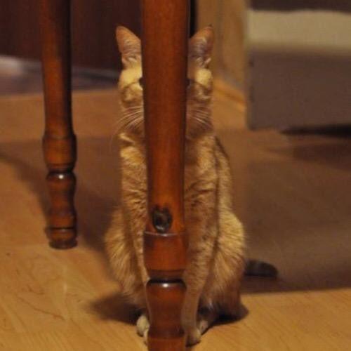 「相手からは(1ミリも) 自分の姿は見えていない」という確信に満ちたネコ様をどうぞご覧ください。