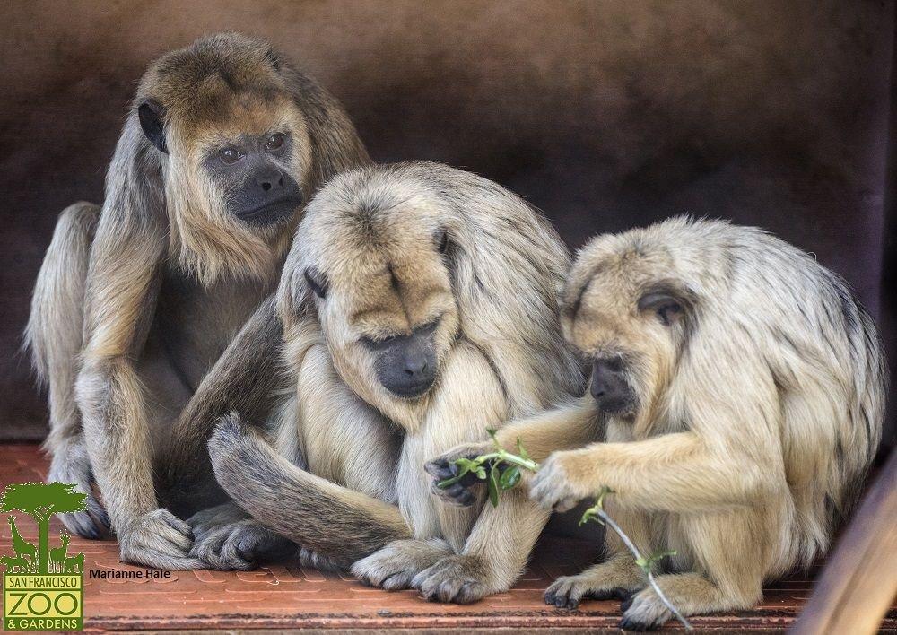 San Francisco Zoo Sfzoo Twitter