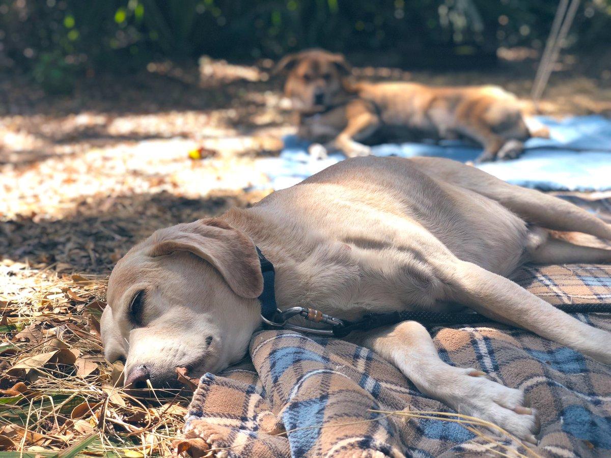 2 Traveling Dogs's photo on #SundayThoughts