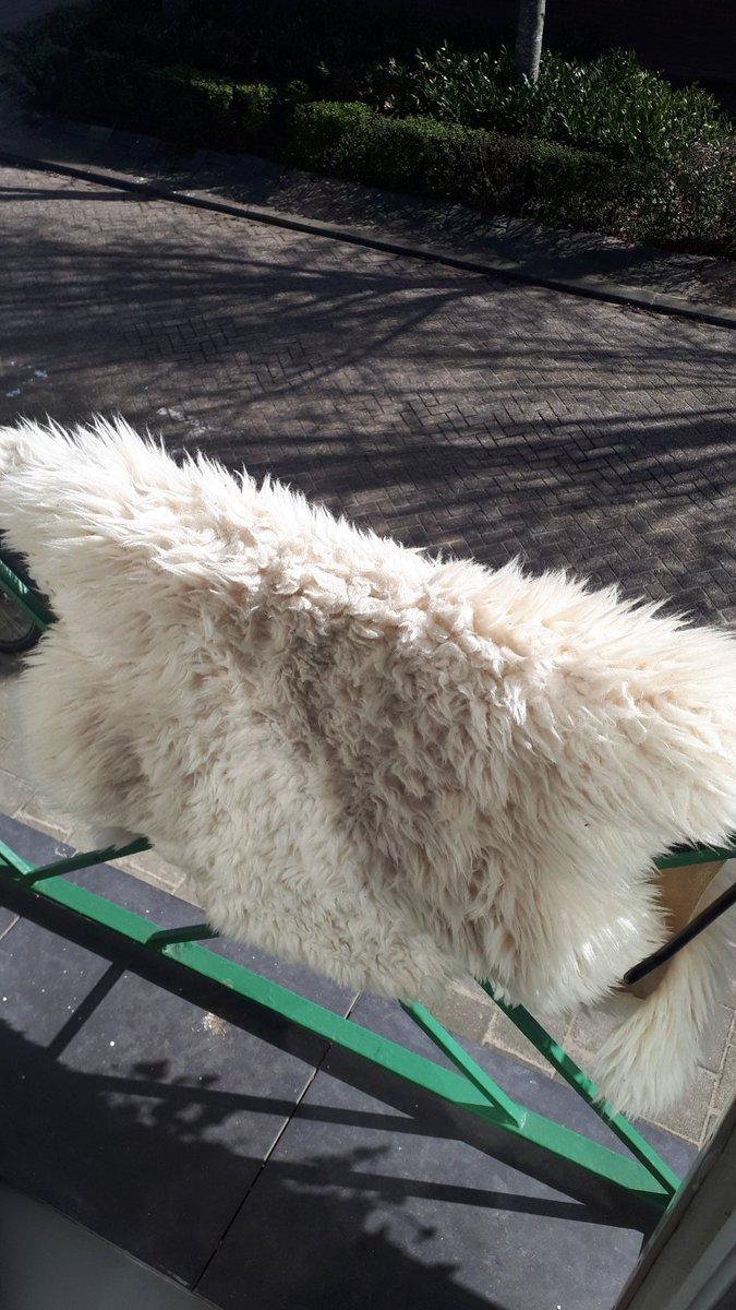 🐏 Kan zo'n schapenvachtje nou in de was? Wolprogramma misschien? #ikea #vies #goor #schapenvacht #kleed #SpringCleaning #wasmachine