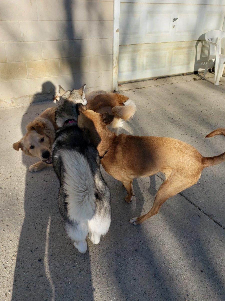 Gia, Gunner, and Zoe have a group hug