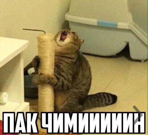 Когда увидела диву Чимина : Моя реакция https://t.co/KX7yudhD2G